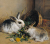 Bunnies Meal II by Alfred Barber