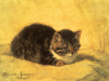 The Parson's Kitten by Henriette Ronner-Knip