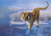 Siberian Tiger by Leonard Pearman