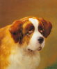 A Head of a Saint Bernard by P. Magee