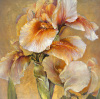 Golden Iris by Dennis Carney