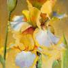 Golden Iris II by Dennis Carney