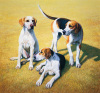Cotswold Foxhounds by Gary Stinton