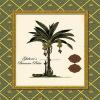 Ghiberie's Banana Palm by Karl Rattner
