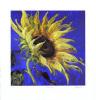Desert Sun by Nel Whatmore