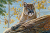 Front Range Cougar by Kalon Baughan
