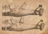 Discovery Of The Circulation Of Blood, 1628 by Christie's Images
