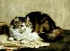 A Tabby Cat, 1920 by Charles Van Den Eycken