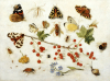 Butterflies, Moths And Other Insects With A Snail And A Sprig Of Redcurrants, 1680 by Jan van Kessel