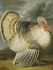 A Turkey In A Landscape by Peter Wenceslaus