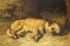A Border Terrier Puppy by Philip Eustace Stretton