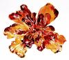 French Marigold by Luisa Gaye Ayre
