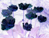 Blue Tulips by Luisa Gaye Ayre