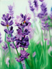 Lavender Lovers by James Knowles