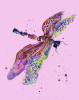 Dragonfly Dreams by Alison Fennell