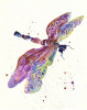 Dragonfly Watercolour - Gossamer Dreams by Alison Fennell