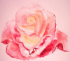 Watercolour Rose by Luisa Gaye Ayre