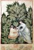 Two women picking sage by Italian School