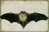 Bat 1522 by Albrecht Dürer