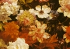 Detail of Flowers by Michelangelo Cerquozzi