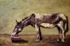 The Donkey by Gustave Courbet