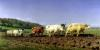 Ploughing in Nivernais 1849 by Rosa Bonheur