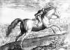 Equus Maurus by Jan van der Giovanni Stradano Straet