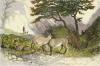 Goats in Glencoe (Restrike Etching) by Newton Fielding