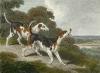 The Fox Hound (Restrike Etching) by Samuel Howitt