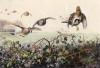 Flying Grouse (over hedgerow) (Restrike Etching) by Archibald Thorburn