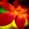 Orchid II by Erin Rafferty