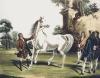 Darley Arabian, Roxana (Restrike Etching) by William Webb