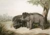 Decoy Elephant Catching a Male (Restrike Etching) by Samuel Howitt
