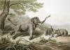 Decoy Elephant Leaving a Male (Restrike Etching) by Samuel Howitt