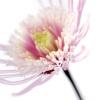 Pink Flower by Ian Winstanley