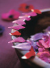 Alizarin Crimson III by Sandra Lane