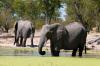 Elephant (Loxodonta africana), Savute Channel, Linyanti, Botswana by Sergio Pitamitz