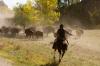 Bison roundup, Custer State Park, Black Hills, Wyoming, USA by Sergio Pitamitz