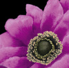 Brilliant Blooms II by Linda Wood