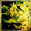 Vintage Garden VI by Amie Mack