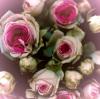 Roses by Katja Marzahn