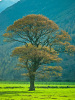 Lake District 483 by Assaf Frank