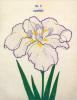 No. 1 Tanporo by The Yokohama Nursery Co Ltd