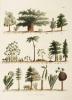 American Plants by William Jowett Titford