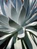 Cactus 1 by Jenny Kraft