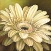 Poppy Portrait by Lisa Audit
