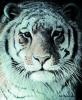 Tiger Portrait by Robert Bateman