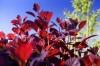 Red Leaves I by Richard Osbourne