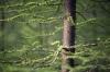Forest Springtime by Richard Osbourne