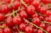 Red Currants by Richard Osbourne
